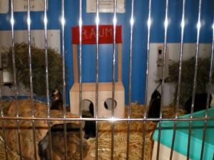 Wort-Spiel-Ort, Wort Nr.: 0003 / Raum, Datum: 15.05.2007, Uhrzeit: 12:20, Ort: Zoohaus Ottensen, Ottenser Hauptstraße 10, 22765 Hamburg